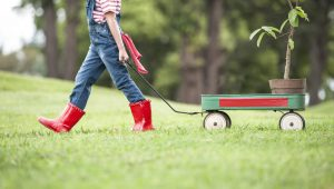 Spruce Up Your Yard This Fall Season